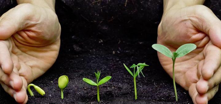 Почему двойное оплодотворение у цветковых растений