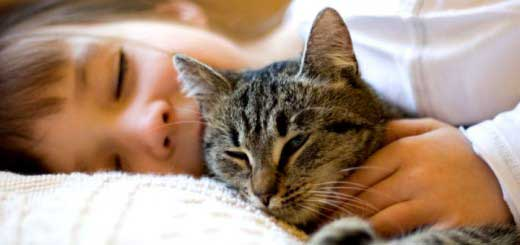 Почему коты мурлыкают?