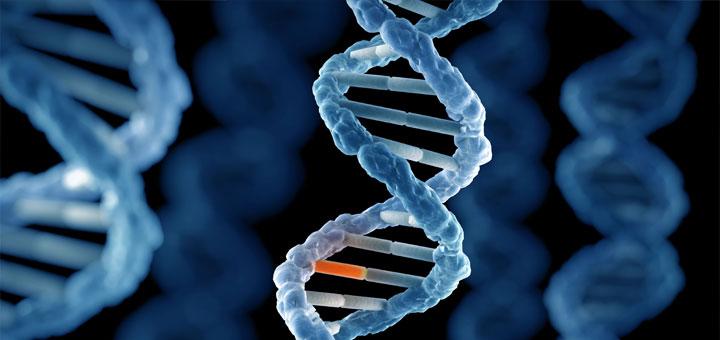 Почему большая часть мутаций не проявляется внешне?