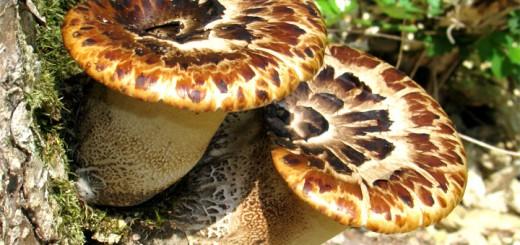 Почему грибы выделяют в отдельное царство?